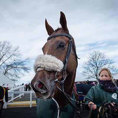 Winning Horses - 13 Nov 2018