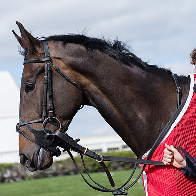 Winning Horses - 24 Mar 2021