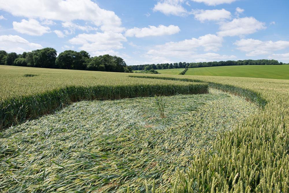Inside a crop circle