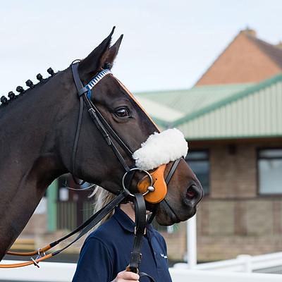 Winning Horses - 10 Nov 2020
