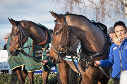 Two horses in the parade ring