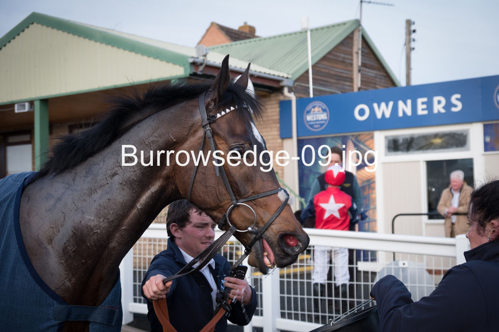 Burrowsedge-09