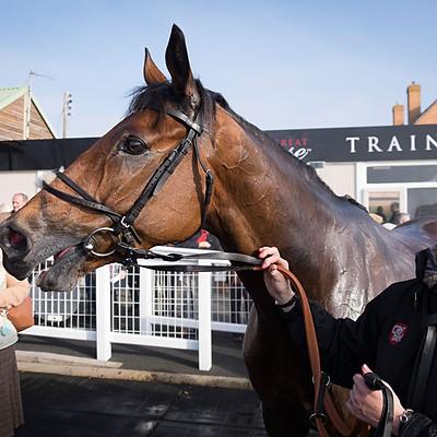 Winning Horses - Oct 31