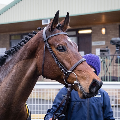 Winning Horses - 17 Feb 2021