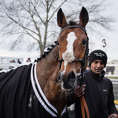 Winning Horses - 16 Dec 2017