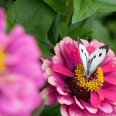 Bodenham Open Gardens