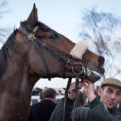 Winning Horses - Jan 11, 2017