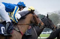 Close up of horses and jockeys