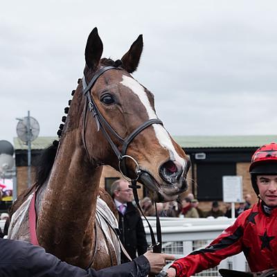 Winning Horses - 9 Mar 2018