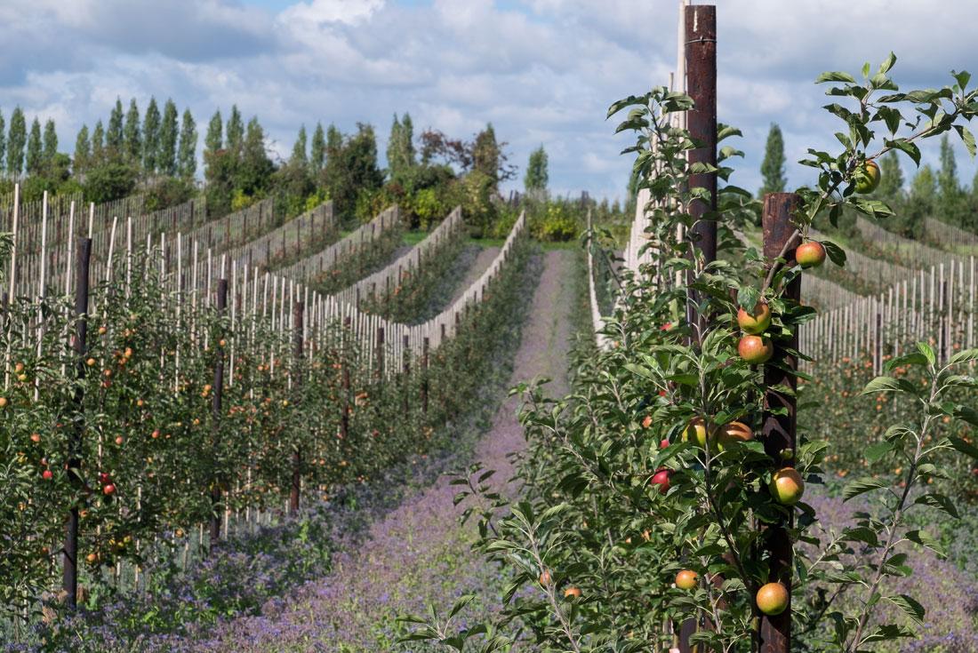 Herefordshire fruit farm