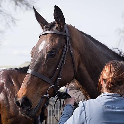 Winning Horses - 26 Mar 2017