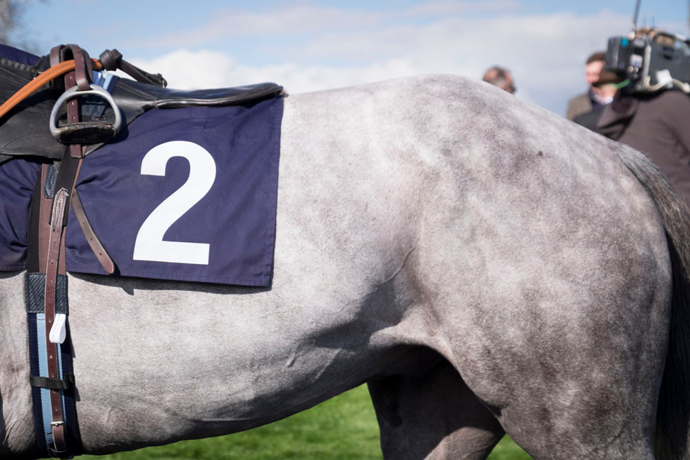 Number 2 horse
