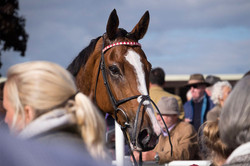 Winning horse at Hereford