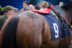 Horse in the parade ring