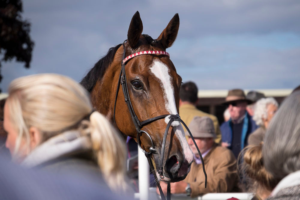 Horse head at Hereford race meeting
