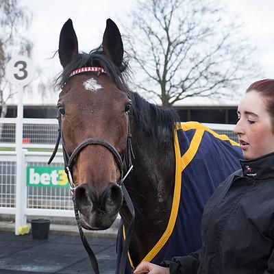Winning Horses - Nov 23