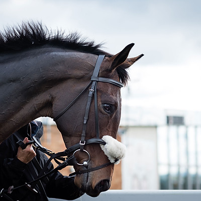 Winning Horses - 13 Oct 2020