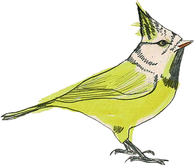 logo_oiseau_dessiné.png