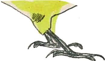 pieds oiseaux.jpg