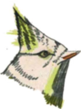 tete oiseau.jpg