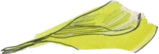 corps oiseau.jpg