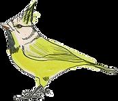logo_oiseau_dessin%C3%A9_edited.png