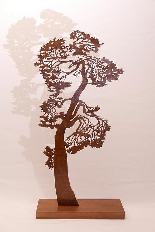 Le pin de la sieste  - Hauteur 1m50