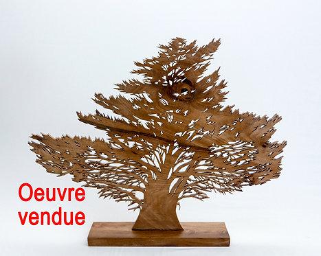 Cyprès de Dahouet  - Hauteur 42 cm
