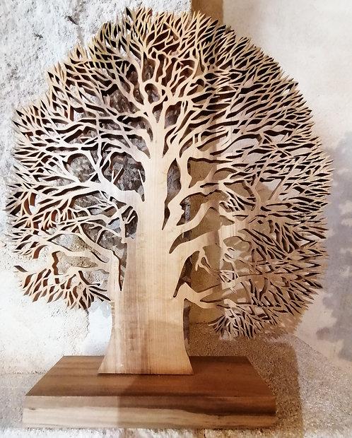 Chêne Soleil  -  Hauteur 30 cm