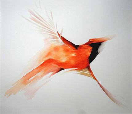 Cardinal  -  42 x 42 cm