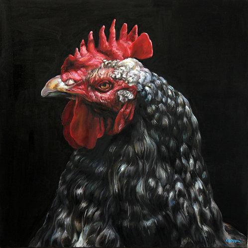 Coq noir,  réf. 20039  -  80x80 cm