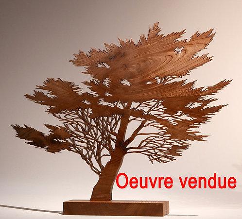 Cyprès de Port la Chaîne  -  Hauteur 43 cm