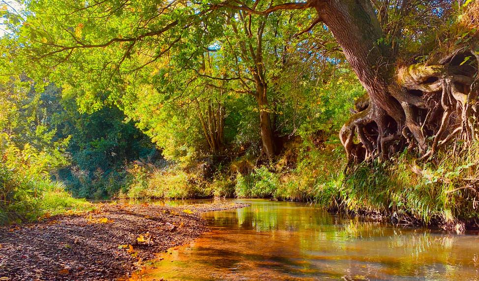 autumn lights on Teise image1.jpeg