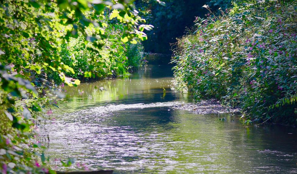 river IMGL0032 2.jpeg