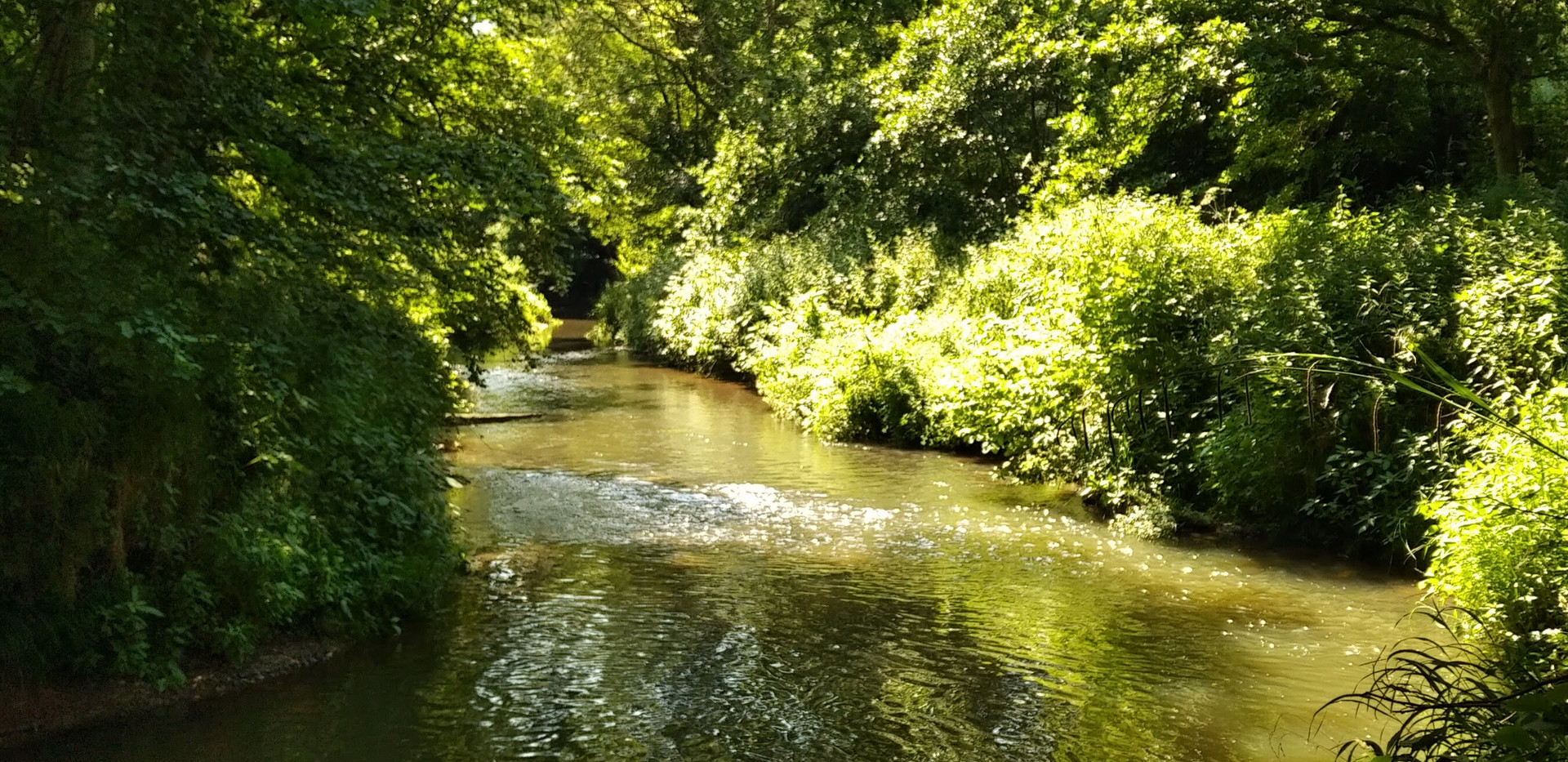 River Teise in June.jpeg