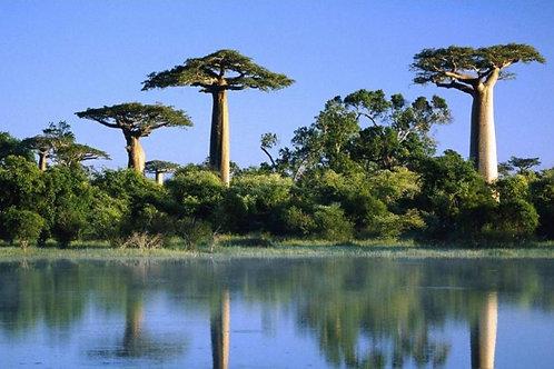 Black Herbalism Series: African Herbalism Webinar