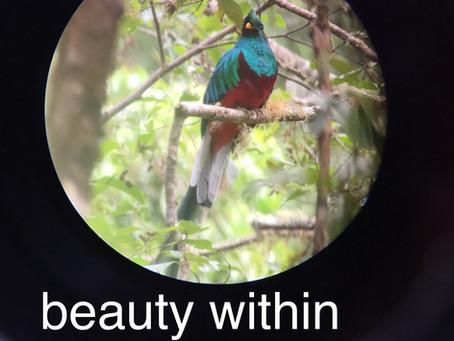 Beauty Within: Seasonal Treatment Series