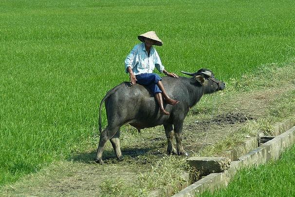 vietnam-1270136_1280.jpg