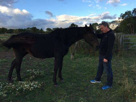 Equine Acupuncture