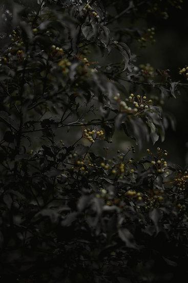 'Yellow Berries' Print