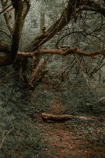 'Forgotten Path' Print