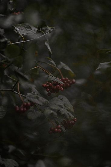'Red Berries' Print