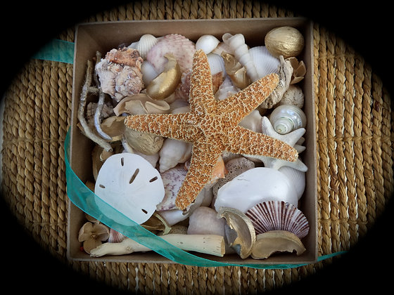 "Shell Potpourri ""Beach Walk""... Larger Bundle!"