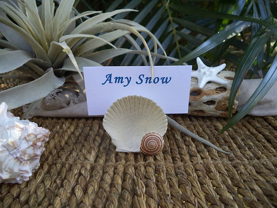 Shell Place Card Holder - Natural Sand Tone (6)