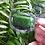 Thumbnail: Nature's Remedy - Transparent Vinyl Sticker