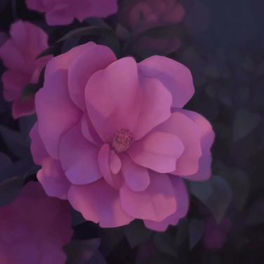 Flower Study Process