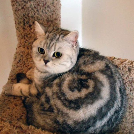 Cats with the most unique fur patterns