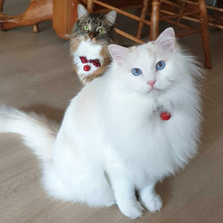 Ameowzing Gifts for your Cat this Christmas