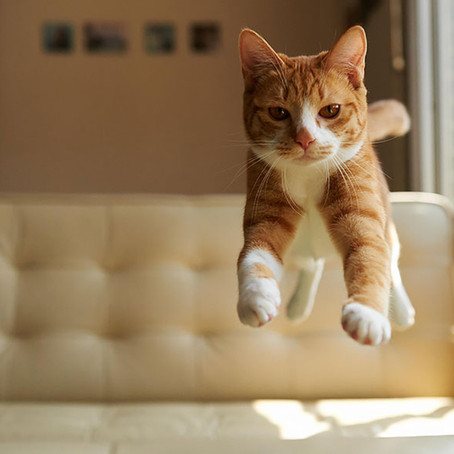Flying Floofs — 15 of the best photos of cats caught in mid-air!
