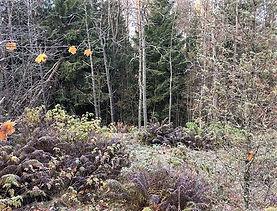 森下圭子, かもめ食堂, ムーミン, フィンランド